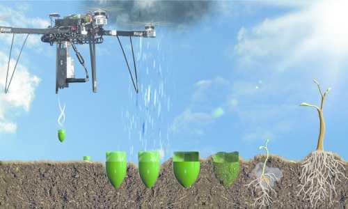 Drohnen pflanzen Bäume