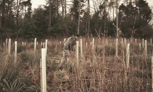 Zur Aufforstung bereites Waldstück.