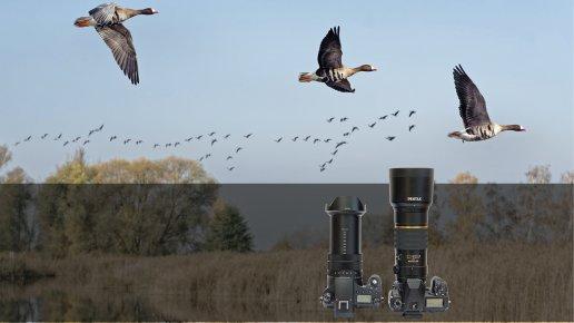 Zugvogel-Fotografie: Mit Einsteiger-Ausrüstung zu guten Ergebnissen