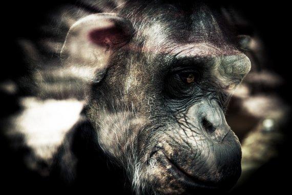 alter Affe im Karlsruher Zoo von kleinerPinguin