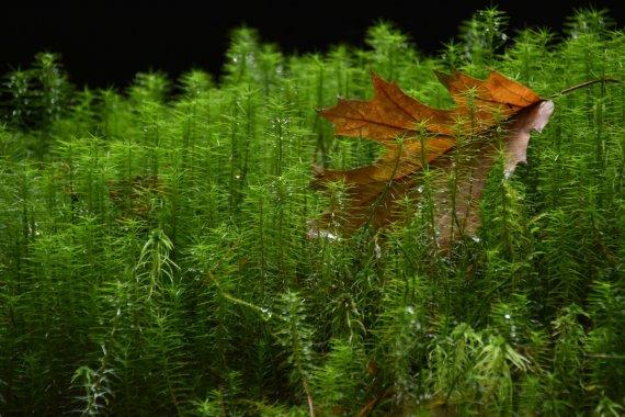 Herbst im Mini-Wald von a.peter