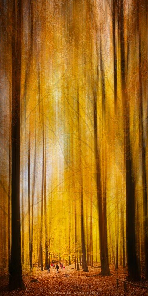 Im Herbstwald von Radonart