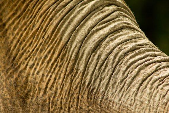 Elefant von Katrin1978
