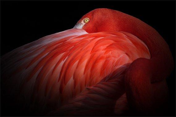 Red... von Jaroslaw M