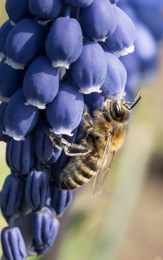 Biene von WoFo Pfalz