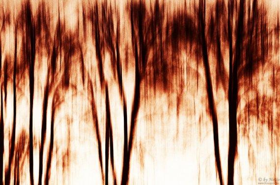 shadows of trees I von novopics.de
