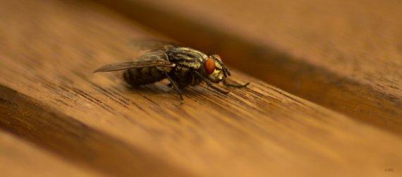 Fliege von Katrin1978