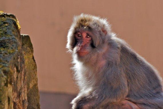 Joe und der Affenfelsen... von FMW51