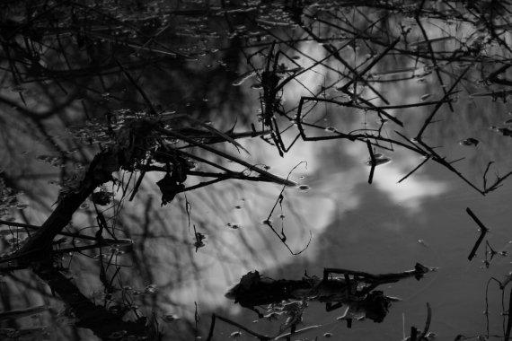 Spiegelung 1 von Reinhard Evers