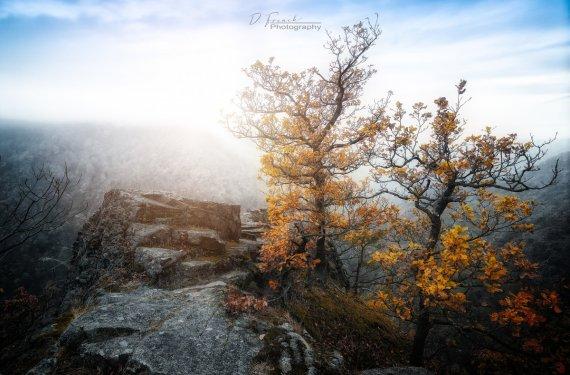Mystisches Thale im Harz von Frenchi81