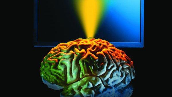 Gehirn und Monitor