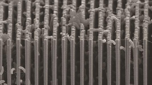 Nanodrähte mit Bakterien für künstliche Photosynthese