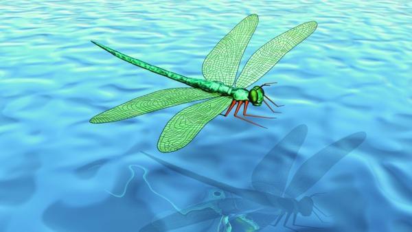 Liebelle fliegt über Wasser