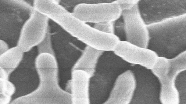 Mikrobiom-Medikamente könnten gegen viele Krankheiten helfen