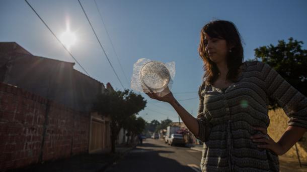 Manipulierte Insekten sollen Virus stoppen