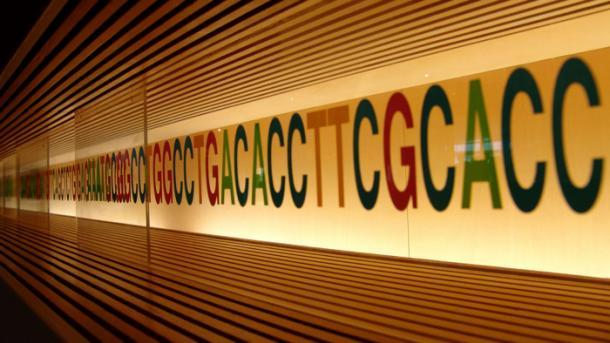 Studie warnt vor neuen gentechnischen Verfahren