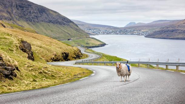 Schafe für Steetview und ein gesetzesuntreuer Robocop