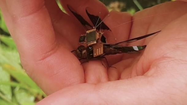 DragonflEye: Cyber-Libelle hebt ab