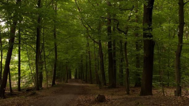 Apple will 400.000 Hektar Wald nachhaltig bewirtschaften