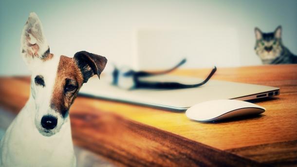 Hund und Katze am Schreibtisch
