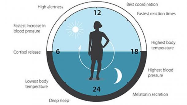 Nobelpreis für Medizin für Erforschung der inneren Uhr