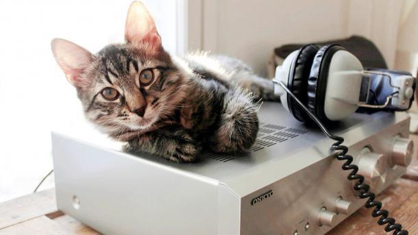 Katze liegt auf Verstärker, daneben Kopfhörer