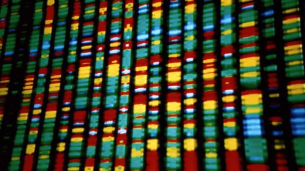 Forscher entwickeln System zum Speichern und Abrufen von Daten in Bakterien-DNA
