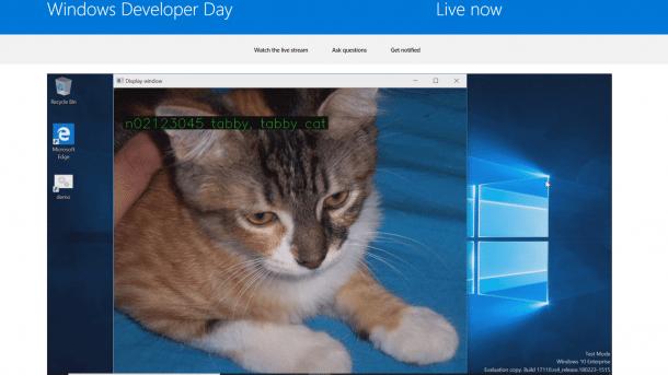 Microsoft Windows ML erkennt Katze