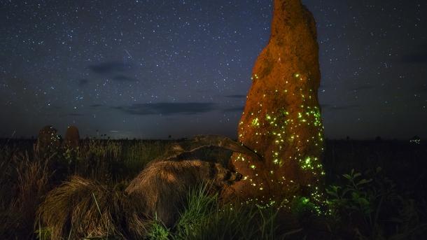 Wildlife Photographer oft he Year: Jury disqualifiziert Siegerbild