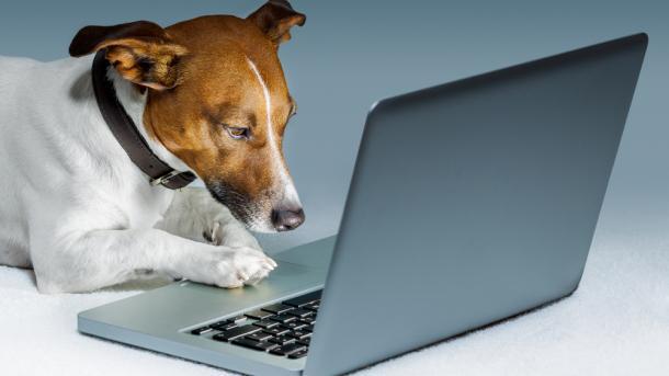 25 Jahre Hunde im Internet – Cartoon erklärt das Netz