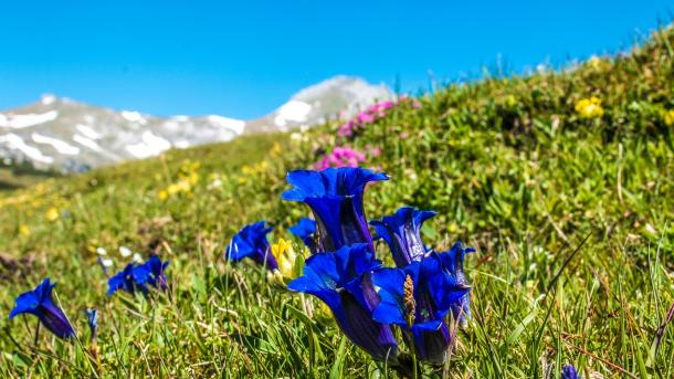 """Ein """"Alarmsignal"""": Pflanzen erobern durch Klimawandel Berggipfel"""