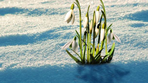 Java: Spring Framework 5.0 erreicht GA-Status