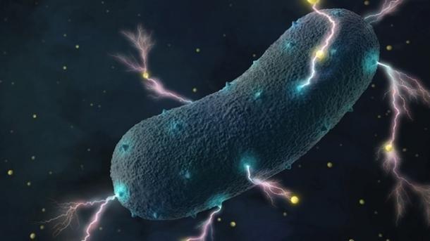 Darmbakterien erzeugen Strom
