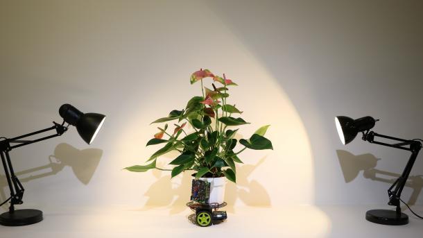 Elowan, die Cyborgpflanze auf Rädern