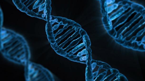 Gene, DNA