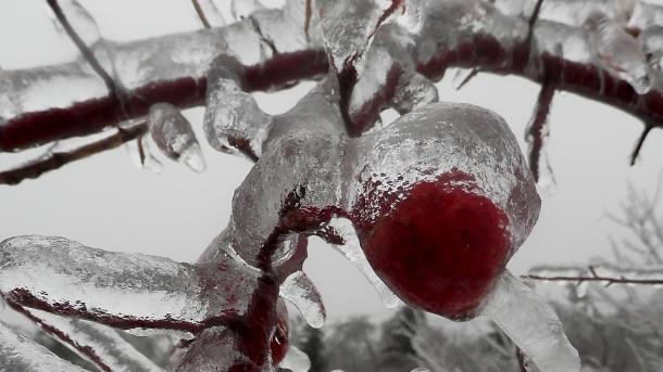 Zweige und rote Früchte mit Eis überzogen