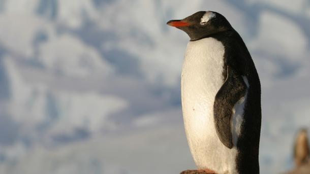 System Down: Drei Uralt-Lücken in Systemd vereinfachen Linux-Angriffe