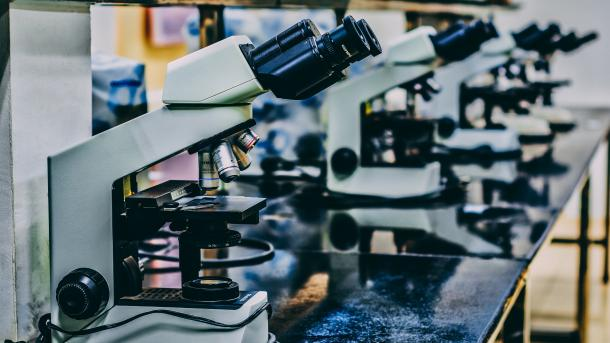 Harvard-Forscher bauen Organismus um