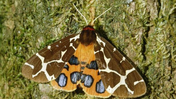 App hilft bei Erfassung von Schmetterlings-Vorkommen