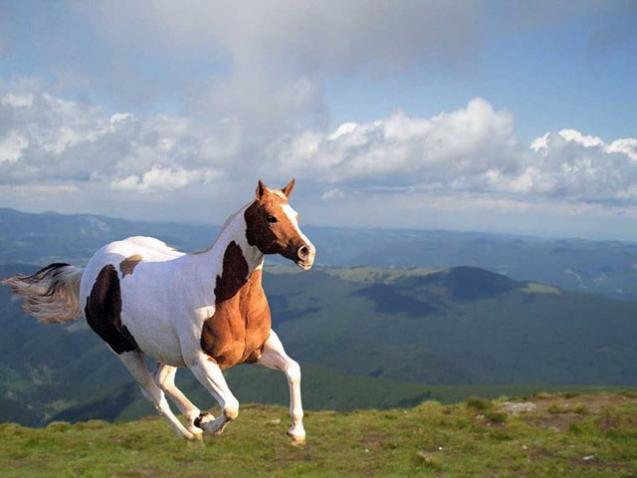 pferde bildschirmschoner