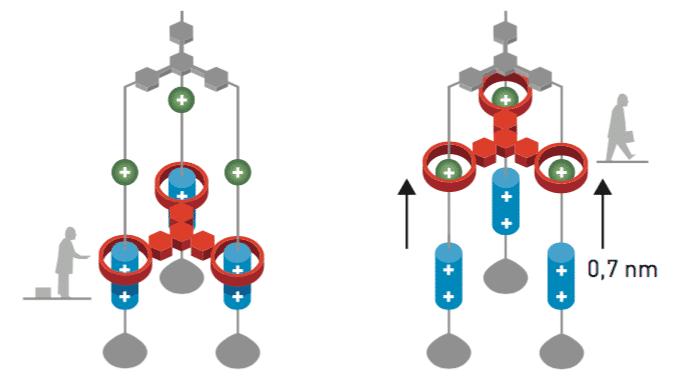 Chemie-Nobelpreis 2016 geht an drei Molekularforscher