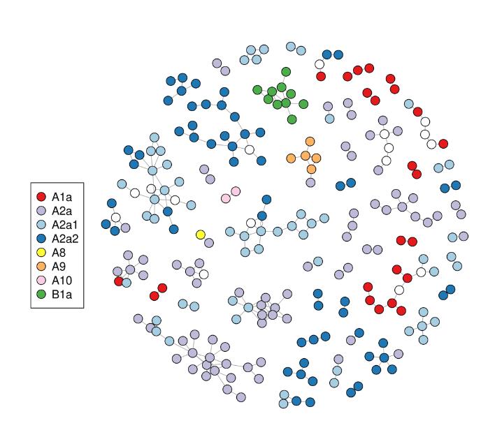 """Mit der so genannten """"Haplotype  analysis""""  von Virusmutationen kann man die Clusterbildung bei der Virusausbreitung in Island verfolgen, die gut mit den Werten aus der Kontaktverfolgung übereinstimmt."""