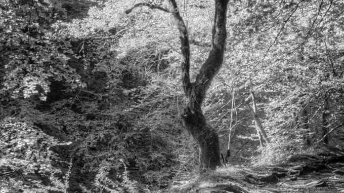Den Wald fotografisch entdecken