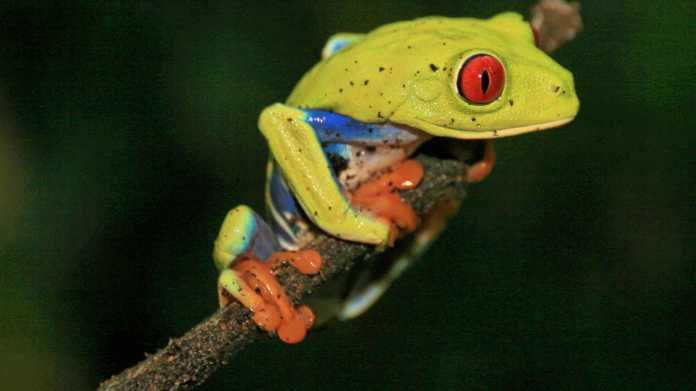 Reisefotografie: c't Fotografie unterwegs in Costa Rica