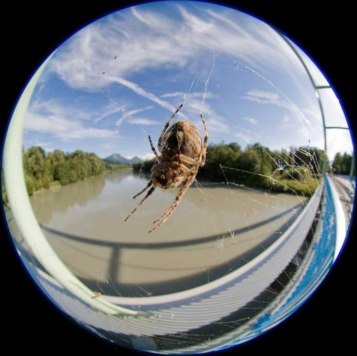 Und was sich darin fängt. Was interessieren da die menschlichen Konstruktionen, die sich über den Fluss spannen?