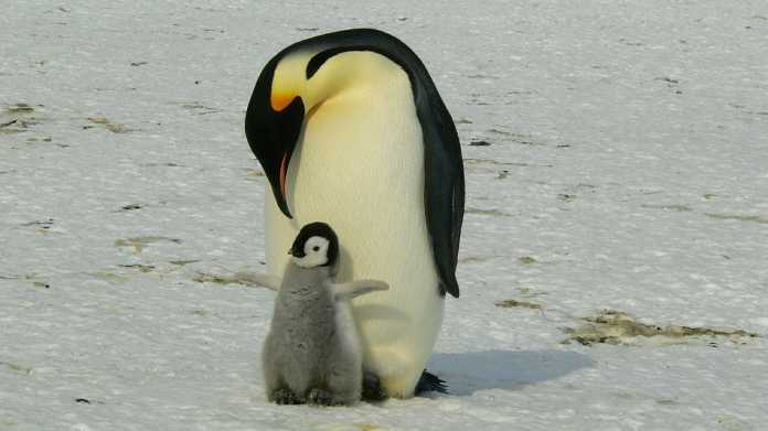 Jetzt patchen: Linux-Kernel anfällig für Denial-of-Service-Angriffe
