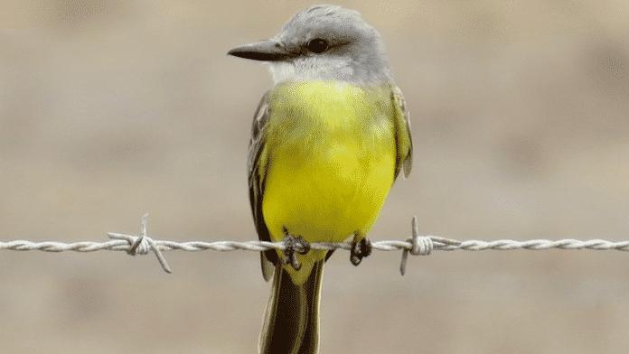 Lang oder kurz: Bei Twitter eigentlich egal