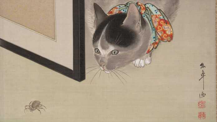 Cat watching a spider von Oide Toko