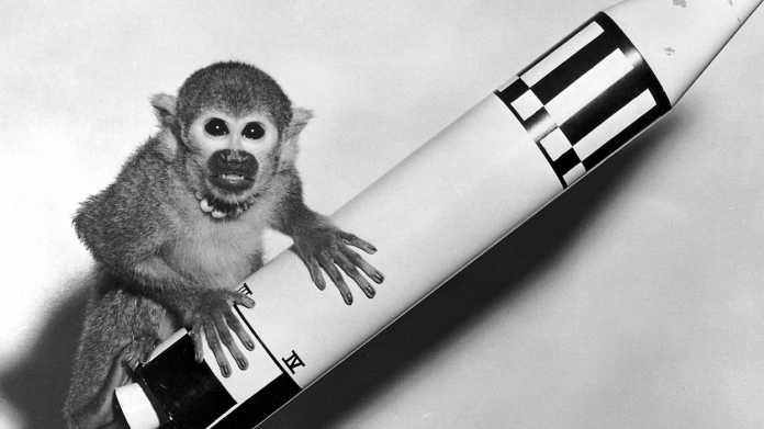 Miss Able und Miss Baker: Vor 60 Jahren flogen zwei Affen ins All