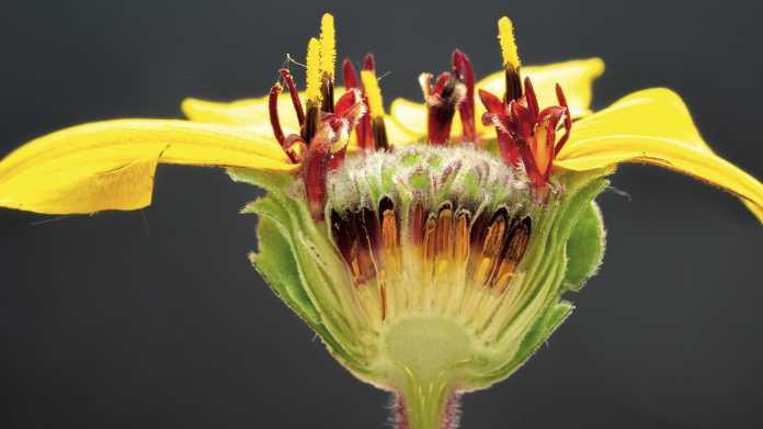 Entdeckungsreise ins Blütenherz